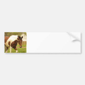 Roaming Paint Horse Bumper Sticker
