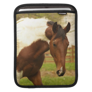 Roaming Paint Horse iPad Sleeve