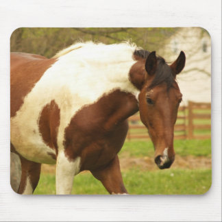 Roaming Paint Horse Mouse Pad