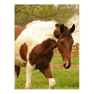 Roaming Paint Horse Postcard