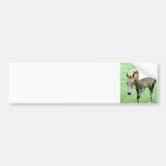Roaming Roan Horse  Bumper Stickers