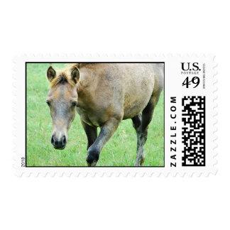 Roaming Roan Horse Postage Stamp
