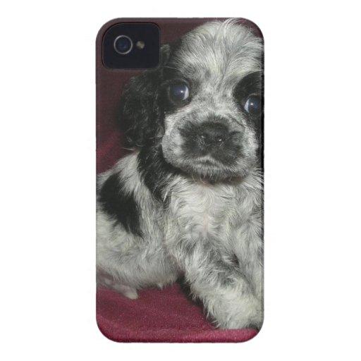 roan american cocker spaniel puppy, Apollo iPhone 4 Case-Mate Cases