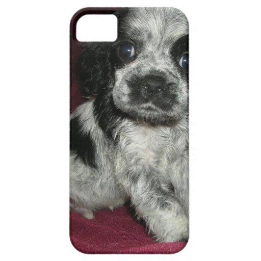 roan american cocker spaniel puppy, Apollo iPhone 5 Cover