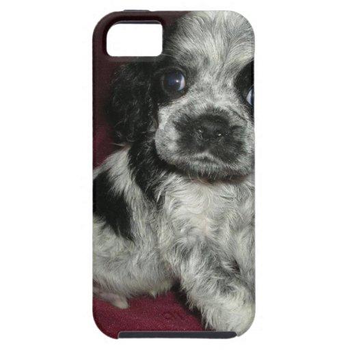 roan american cocker spaniel puppy, Apollo iPhone 5/5S Cover