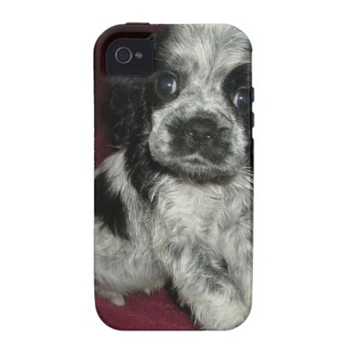 roan american cocker spaniel puppy, Apollo iPhone 4/4S Case