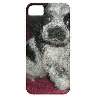 roan american cocker spaniel puppy, Apollo iPhone SE/5/5s Case