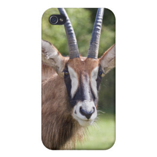 Roan Antelope iPhone Speck Case Cover For iPhone 4