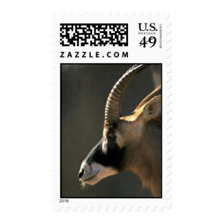 Roan Antelope, Left Profile Stamp