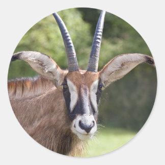 Roan Antelope Sticker