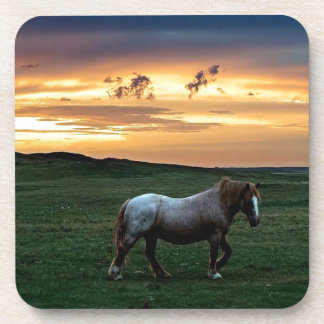 Roan at Sunset on the Canadian Prairies Beverage Coaster
