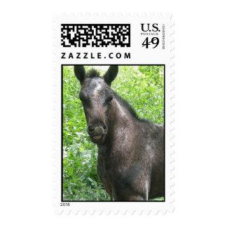 Roan Colt Postage Stamp