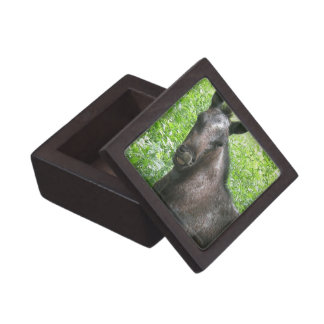Roan Colt Premium Gift Box
