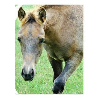 Roan Horse Photo Postcard