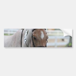 Roan Pony Bumper Stickers