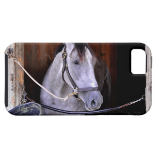 Roan Thoroughbred at the Todd Pletcher Barn iPhone 5/5S Case