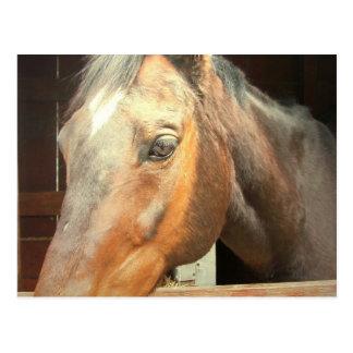 Roan Thoroughbred Horse Postcard