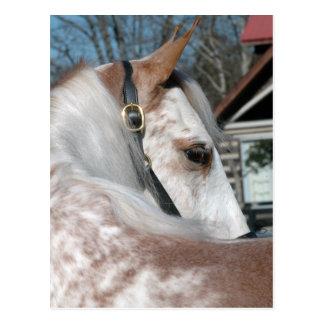 Roan Walking Horse Postcard