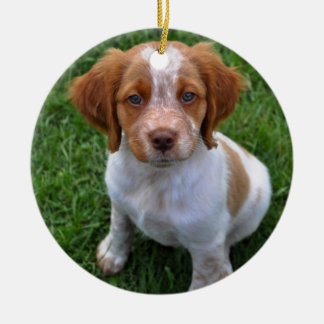 Roans Rule! Brittany puppy ornament