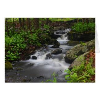 Roaring Brook Forest Stream in Spring Petersham MA Card