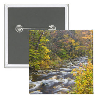 Roaring Brook in fall in Vermont's Green 2 Button