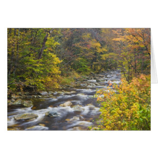 Roaring Brook in fall in Vermont's Green 2 Card