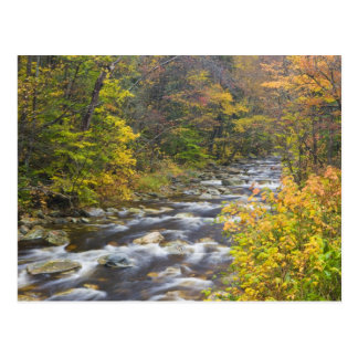 Roaring Brook in fall in Vermont's Green 2 Postcard