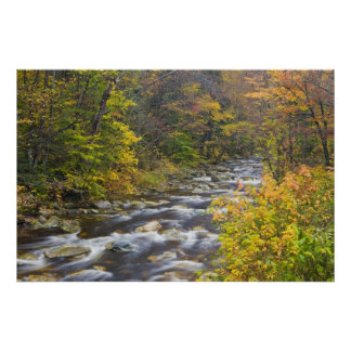 Roaring Brook in fall in Vermont's Green 2 Poster
