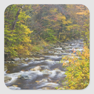 Roaring Brook in fall in Vermont's Green 2 Square Sticker