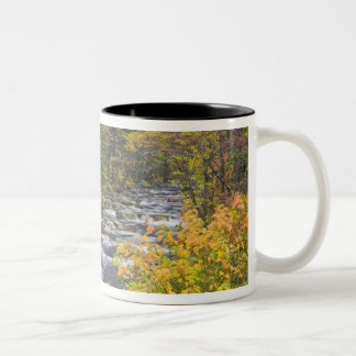 Roaring Brook in fall in Vermont's Green 2 Two-Tone Coffee Mug