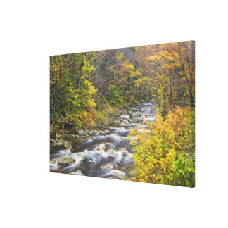 Roaring Brook in fall in Vermont's Green Canvas Print