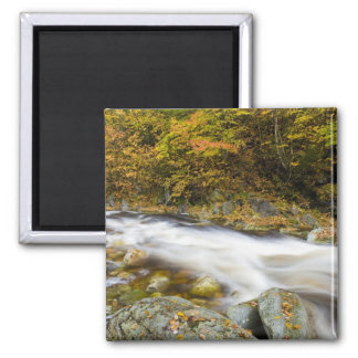 Roaring Brook in fall in Vermont's Green Magnet