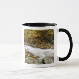 Roaring Brook in fall in Vermont's Green Mug