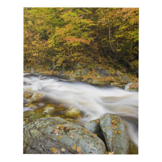 Roaring Brook in fall in Vermont's Green Panel Wall Art