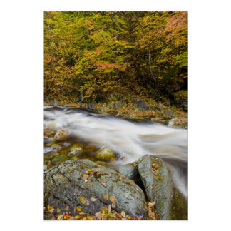 Roaring Brook in fall in Vermont's Green Poster