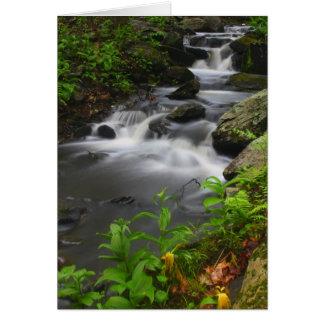 Roaring Brook in Spring, Petersham Massachusetts Card