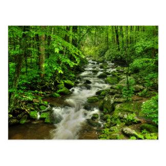 Roaring Forks Motor Trail Postcard