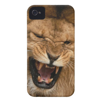 Roaring Lion iPhone 4 Cover