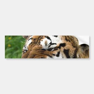 Roaring Tiger Bumper Sticker