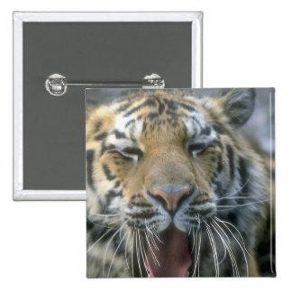 Roaring Tiger Pinback Buttons