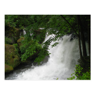 Roaring Waterfall Postcard