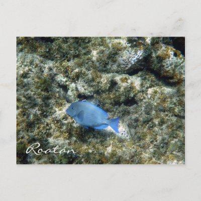 roatán fish postcard