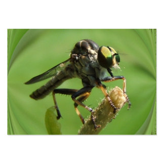 Robber Fly 5 ~ ATC Large Business Cards (Pack Of 100)