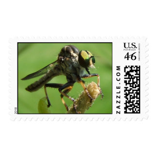 Robber Fly 5 stamp