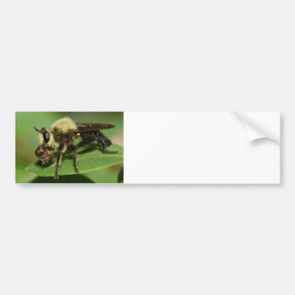 Robber Fly with Lunch Bumper Sticker
