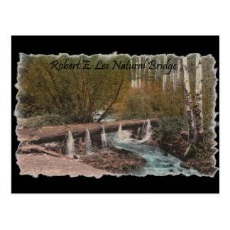 Robert E. Lee Natural Bridge Postcard