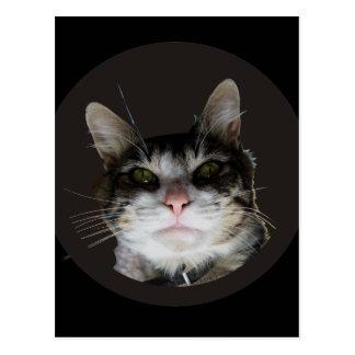 Robert the Cat Postcard