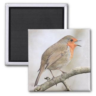 Robin 2 Inch Square Magnet