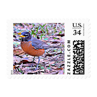 Robin American (Connecticut, Michigan, Wisconsin) Postage
