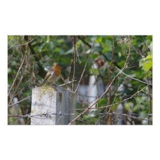 Robin and Barbed Wire Photo Print
